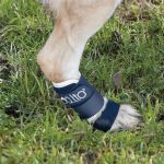 Balto – BT Splint – BACK LEG